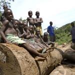 Лесозаготовка в Конго