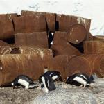 Нефтяные бочки и пингвины