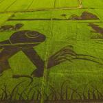 Рисовое поле с художественным оформлением