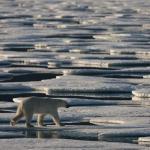 Символом последствий изменения климата
